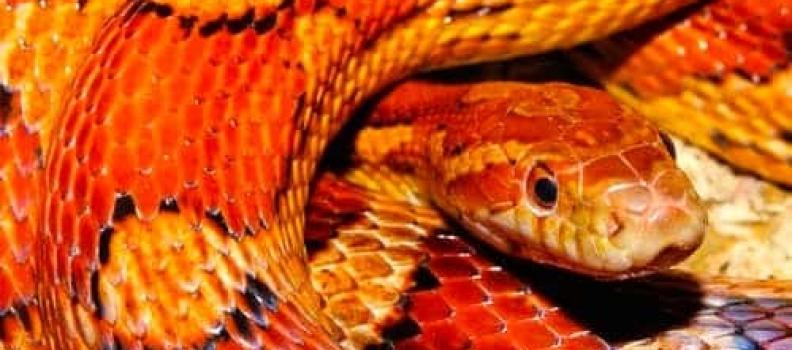 Does a 'Reptilian Brain' affect Mental Health?